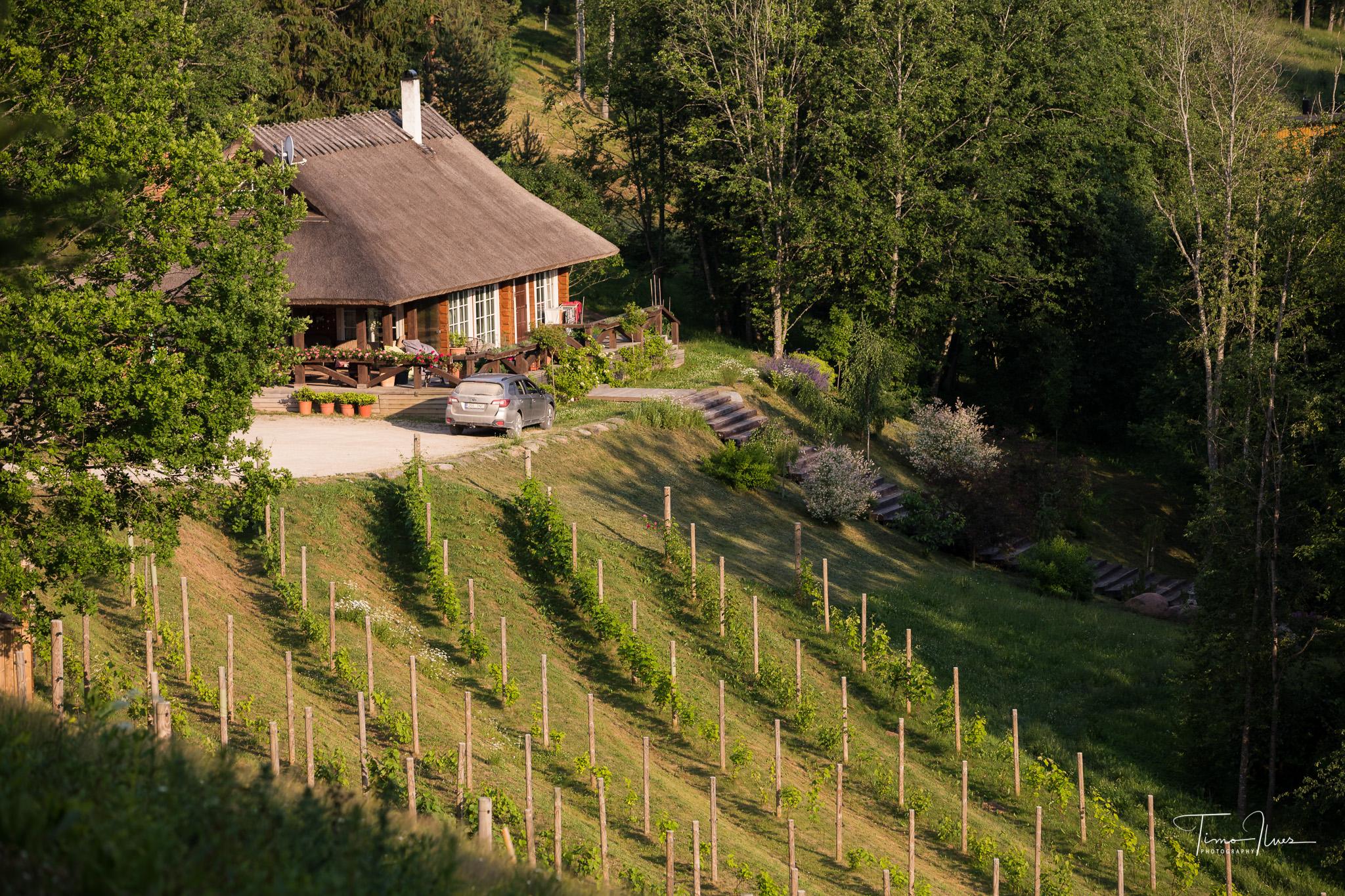 Mullfest-Murimäe-veinikelder.-5